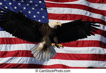 águila calva, aterrizaje, bandera estadounidense