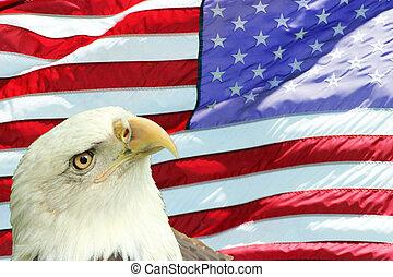 águila calva, conjunto, contra, bandera estadounidense