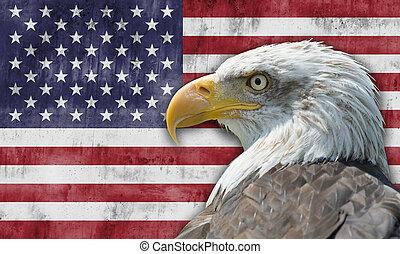 águila, calvo, bandera estadounidense