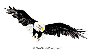 águila, calvo