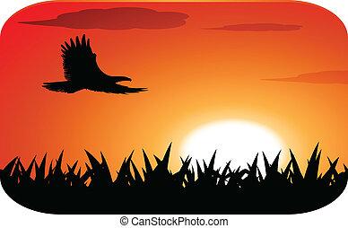 águila, con, ocaso, plano de fondo