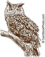 águila, dibujo, grabado, búho, ilustración