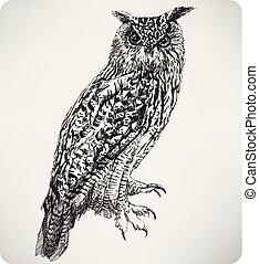 águila, dibujo, illustration..eps, búho, mano, vector, pájaro