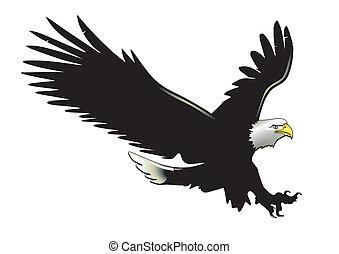 águila, en vuelo