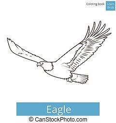 águila, libro colorear, vector, aprender, aves