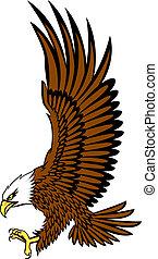 águila, vector, calvo