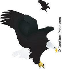 águila, vector, ilustración
