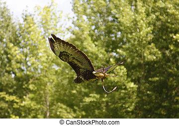águila, vuelo, con, árboles verdes, plano de fondo