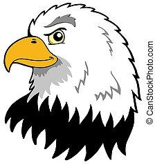 águilas, norteamericano, cabeza