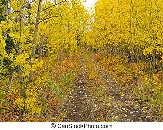 álamo temblón dorado, desierto, rastro, bosque, otoño, boreal
