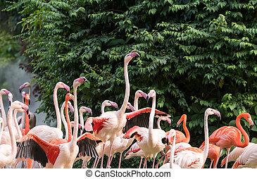 álló, flamingó, tó, madarak