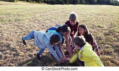 álló, természet, csoport, gyerekek, mező, playing., iskola...