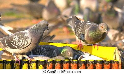 állat, madarak, balek, étkezési