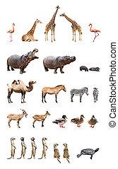 állatok, állatkert