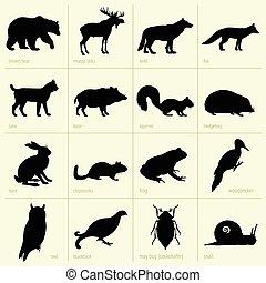 állatok, erdő
