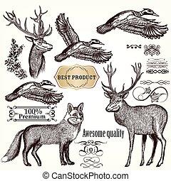 állatok, flourishes, gyűjtés, vektor, kéz, húzott