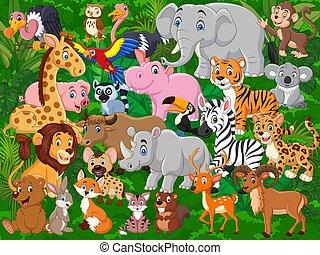 állatok, gyűjtés, állhatatos, vad, karikatúra