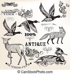 állatok, gyűjtés, kéz, flourishes, vektor, húzott