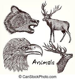állatok, gyűjtés, vektor, kéz, húzott