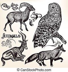 állatok, gyűjtés, vektor, tervezés, kéz, húzott