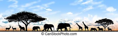állatok, közül, afrika