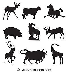 állatok, ungulates