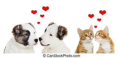 állatok,  valentines, két, Nap