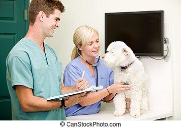 állatot megvizsgál, kutya, felülvizsgálni