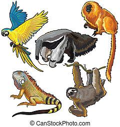 állhatatos, állatok, dél-amerika