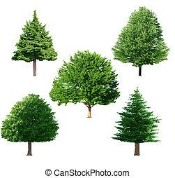 állhatatos, fa