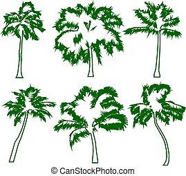 állhatatos, fiatal, elszigetelt, bitófák, zöld, tropikus, háttér., körvonal, vektor, zöld, ábra, érett, detektívek, pálma, fehér