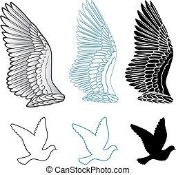 állhatatos, galamb, madár, kasfogó