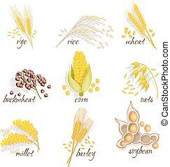 állhatatos, ikon, gabonafélék