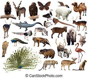 állhatatos, közül, indian peafowl, és, más, ázsiai, állatok