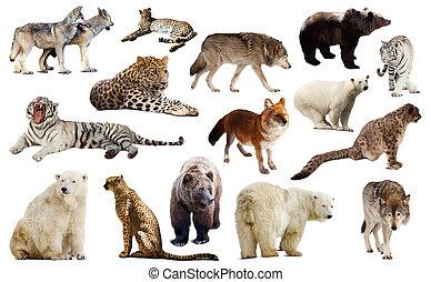 állhatatos, közül, kevés, predators., elszigetelt, felett, fehér