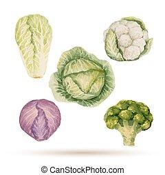 állhatatos, közül, vízfestmény, vegetables.