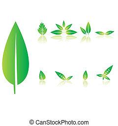 állhatatos, közül, zöld