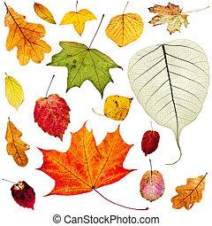 állhatatos, színes, zöld, elszigetelt, ősz, fehér