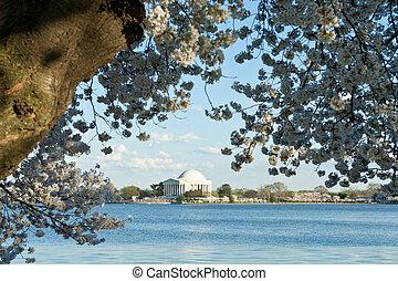 árapály, cseresznye virágzik, jefferson, egyenáram, medence, emlékmű