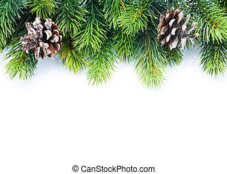 árbol abeto, frontera, navidad