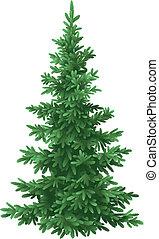 árbol abeto, navidad, aislado