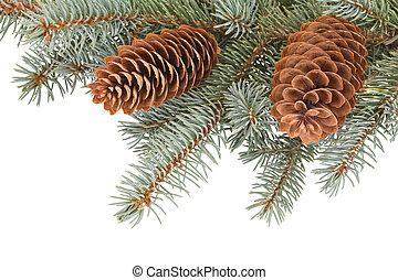 árbol abeto, ramas, piñas
