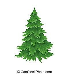 árbol abeto, vector, conífero, ilustración, follaje, ...