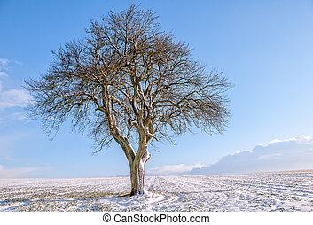 árbol, aislado