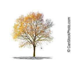 árbol, aislado, muerto, alto, plano de fondo, blanco,...