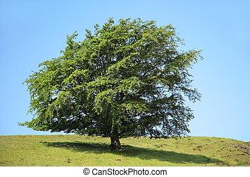árbol, belleza