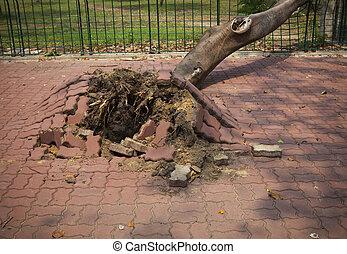 árbol caído, después, tormenta, ventoso, en, pueblo