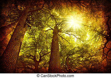 árbol cedro, bosque