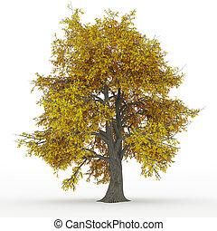 árbol ceniza