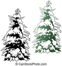 árbol conífero, nevoso
